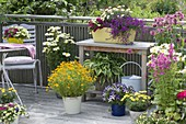 Colorful balcony with Leucanthemum superbum (Margerite), Monarda
