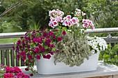 White metal jardiniere planted with Calibrachoa 'Purple Rain'