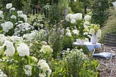 Small seating place at the white Hydrangea 'Annabelle' flowerbed