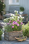 Old wooden box planted with pink 'Hunyard', by Poulsen