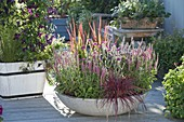 Gray bowl with Veronica spicata 'Rotfuchs'