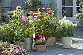 Summer terrace with self-flowered flowers