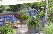 Mit Sonnensegel schattierte Terrasse, Kübel mit Agapanthus (Schmucklilien)