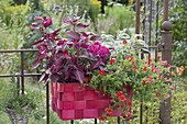 Red wicker basket instead of balcony box at the rusty garden fence Calibrachoa