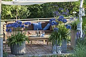 Terrace with awning in the late afternoon, Agapanthus in bucket