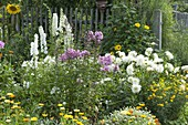Bed with white dahlias and perennials