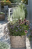 Basket with Echinacea 'Green Envy', Pennisetum setaceum