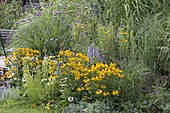 Blue-yellow late summer bed with perennials and grasses