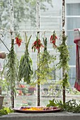 Herbs drying on the window-mugwort, sage, fennel