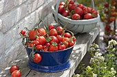 Freshly harvested tomatoes in enamel bowl and woodchip basket