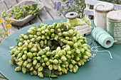 Wreath of Humulus lupulus (hops)