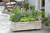 Wheeled box with vegetables and herbs