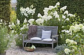 Shady seating area on wooden bench on white flowerbed with hydrangea