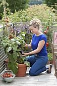 Frau erntet Auberginen (Solanum melongena) auf mediterranem Balkon