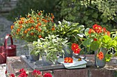 Edible arrangement on garden wall Tagetes tenuifolia