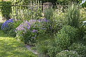 Create perennial flowerbed with cranesbill and grasses