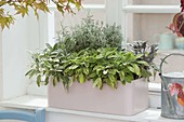 Pastel-pink balcony box with herbs by the window