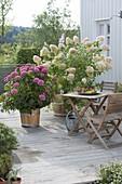 Terrace with hydrangeas