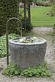 Granite trough with Nymphaea tetragona 'Alba' (dwarf sea-rose)