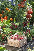 Vegetable bed with tomatoes, hot peppers, snack paprika