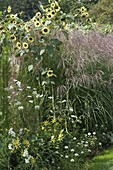 White-yellow bed with summer flowers and grasses