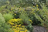 Yellow late summer garden