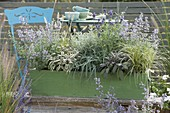 Green wooden box with lavender 'Oxford Gem', sage 'Tricolor'
