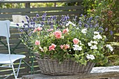 Basket with Pelargonium zonal 'Charmant', peltatum 'White Pearl'