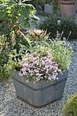 Wooden tub with artichoke, Diascia Breeze 'Pastel'