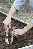 Plant the light root in the raised bed