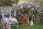 Chaise longue with Aster novae-angliae 'Barr's Pink'