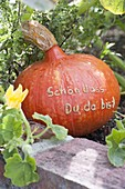 Hokkaido pumpkin with message 'Glad you are there'