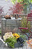 Old zinc tub autumnally planted with Chrysanthemum indicum