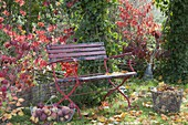 Red bench in autumnal garden, basket with freshly picked apples