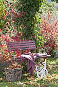 Red bench in autumnal garden, basket with autumn leaves