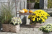 Gravel terrassse with Chrysanthemum 'Splash Meadow' new, 'Kiraz' yellow