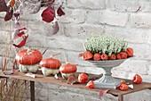 Rusty side table with Calluna vulgaris Garden Girls 'Helena'