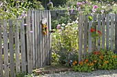 Man builds wooden fence with gate for organic garden
