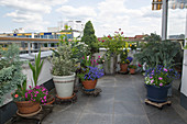 Roof terrace with planted pots on mobile coasters