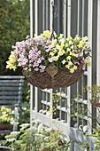 Wicker basket planted with Antirrhinum (snapdragon) and Diascia