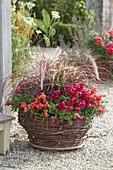 Basket planted with Antirrhinum and Pennisetum setaceum