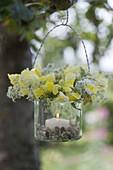 Glass as a lantern with Antirrhinum flowers