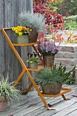 Orange plant stairs with Viola cornuta, Calocephalus