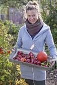 Woman harvesting the last fruit vegetables in organic garden