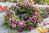 Autumn wreath with flowers of Bergenia, Hedera and Erica