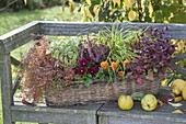 Autumnally planted basket box on wooden bench viola cornuta