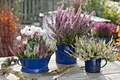 Calluna vulgaris Garden Girls, Erica gracilis