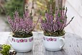 Calluna vulgaris Garden Girls 'Lena'