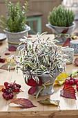 Autumn table decoration with herbs