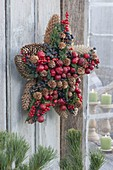 Star made from cones of Picea, Larix, Malus